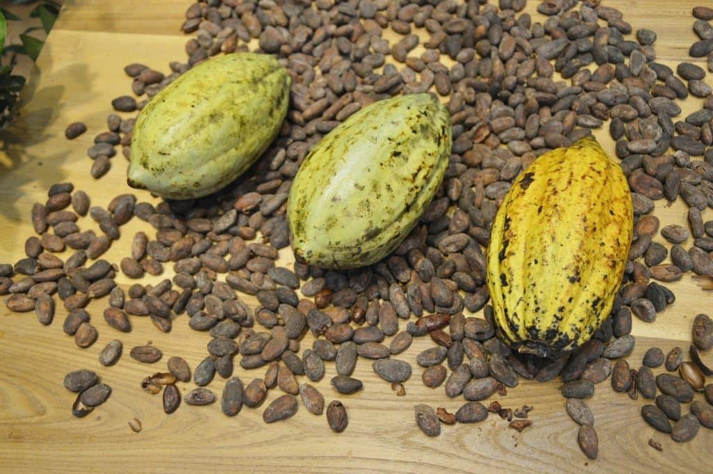 vertus cacao